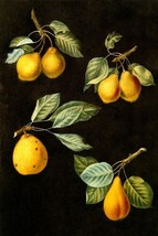 PEAR VARIETY VALEY PETIT RUSSELET DOYENNE FRUIT PRINT BY GEORGE BROOKSHA... - $9.90+