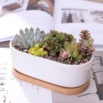 Minimalist White Ceramic Succulent Plant Porcelain Planter Decorative De... - $26.46 CAD