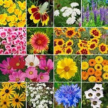 1250 Seeds or 1/4 OZ Daisy Crazy, Daisy Wildflower Seed Mix, 10 Species - $7.92