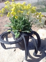 Charming Western Horse Shoe Bug Plant Holder - $26.54 CAD