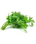 4800 Seeds Celery Seeds, Tall Utah 52/70 , NON-GMO, Heirloom - $5.94
