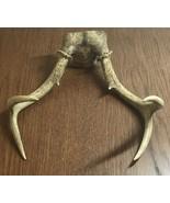 Deer Antlers 6 Points - $28.04