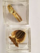 Artifact Insect Entomology Beetle Collection 23 Specimen Dried Real Taxidermy image 6