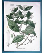 STRYCHNINE Plant Medicinal Strychnos Toxifera - Beautiful COLOR Botanica... - $26.01