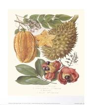 Star Fruit & Akee-Poster - $56.10