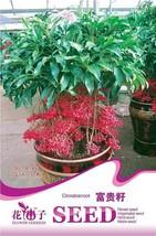 10 Seed Coral Berry Ardisia Crenata Sub Tropical o Indoor, DIY Beautiful... - $8.99