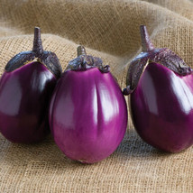 Beatrice Eggplant Seed, Vegetable Seeds, Ship From US - $17.00