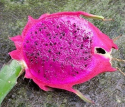 Dragon fruit purple flesh pitaya exotic edible sweet cactus seed  @ 1000... - $29.99