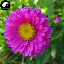 Buy Pink Callistephus Flower Seeds 100pcs Plant Flower Callistephus Chin... - $5.99
