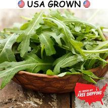 2 grams of Arugula Herb Seeds, Salad Rocket, FREE SHIPPING, NON GMO Seeds - $9.99