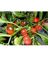 Pepper, Large HOT Cherry, Heirloom, 20 Seeds, Great Fresh N Cooked - $1.59