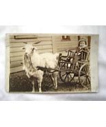 Vintage Photo Postcard Boy in Goat Drawn Cart - $19.99