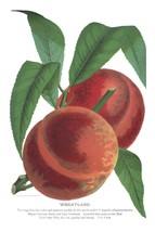 Seed Catalog: Wheatland - Seneca Seed Catalog - 1893 - $12.95+