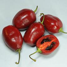 ROCOTO ECUADORIAN RED PEPPER FOR HELL 10 SEEDS,SEMILLAS,Capsicum pubesce... - $3.40