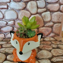 Mini Fox Planter with Succulent Arrangement, Succulent Gift, Animal Planter Pot image 7