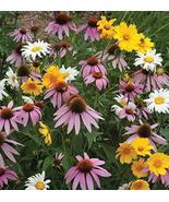 Non GMO Bulk All Perennial Wildflower Seed Mix Non GMO (50 Lbs) - $2,137.91