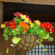 25 Mix Nasturtium Flower Fresh Seeds - $8.99