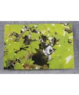 Photo Notecard German Shepherd hiding in the Vine Maples 4x6 Blank Notec... - $4.25