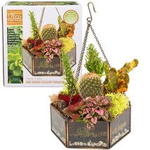 Deco Glass Geometric Terrarium, Succulent & Air Plant- Hexagon Mini 6.5 ... - $12.74
