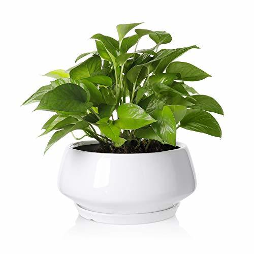 Greenaholics Large Plant Pot 8 8inch Round Ceramic