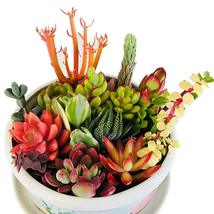 Live Succulent Cuttings 10 Assorted Varieties Succulents For Wedding Par... - $27.99