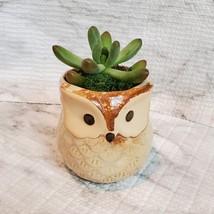Owl Planter with Succulent, Many Fingers Sedum Pachyphyllum, Bird Animal Planter image 2