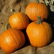 SHIP FROM US 10 Seeds Spookie Pumpkin,DIY Vegetable Seeds AM - $23.99