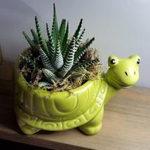 "Succulent in Ceramic Turtle Pot Live Haworthia Zebra Plant 5"" Green Planter image 3"