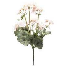 Geranium Bush by OakRidge - $10.99