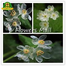 200PCS Rare Exotic Blooming Plants Transparent Flowers Seeds Skeleton Fl... - $4.02