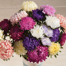 Tower Custom Mix China Aster Flower Seed - $8.99