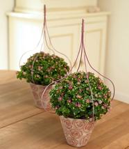 100Pcs Very Elegant Exacum Affine Seeds Hybrid F1 Persian Violets IMA1 - $17.99