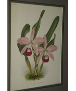 Lindenia Print Limited Edition Laelia x Juvenilis Orchid Collectible Flo... - $15.19