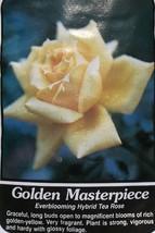 Golden Masterpiece Yellow Rose 2 Year Live Bush Plants Shrub Plant Fine ... - $34.95