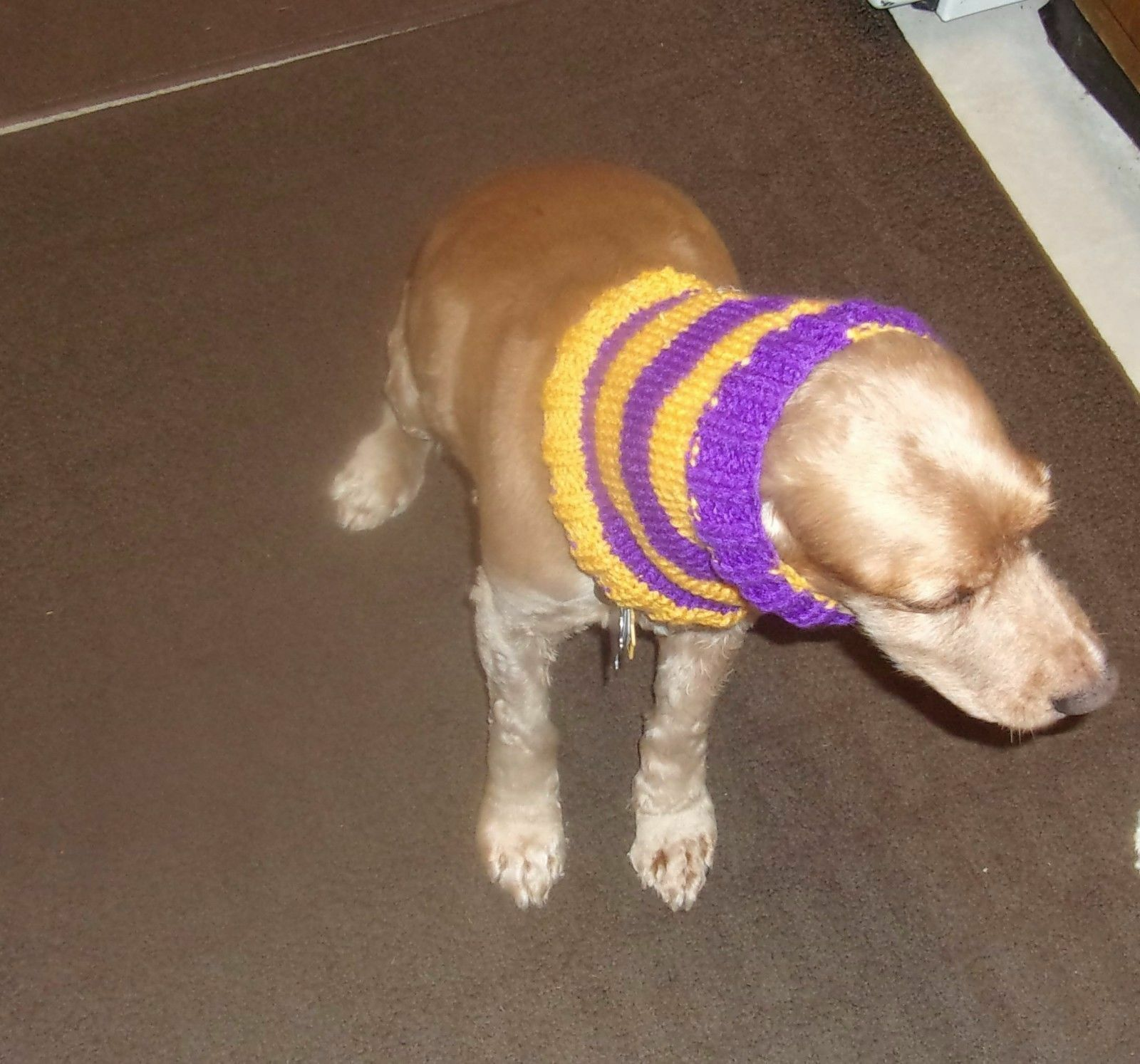 Brand New Hand Knit Purple and Gold Dog Snood Neck Warmer For Dog Rescue Charity