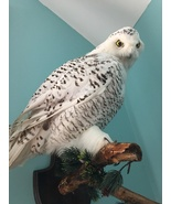 wall hanger taxidermy bird owl white large   - $1,195.00