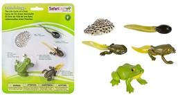 Safari Ltd  Life Cycle of a Frog - $13.12