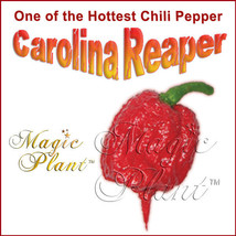 Carolina Reaper Dry Pepper Whole 1kg / 2.2lb   Dried Reaper Pepper Extremely Hot - $128.65