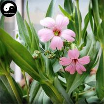 Buy Rosa Pink Prosperity Flower Seeds 100pcs Plant Flower Garden Prosperity - $5.99