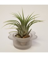 "Air Plant plus Glass Holder with River Rocks, 2.5"" Airplant Tillandsia I... - $9.99"
