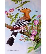 Hoopoe - Great Willow Herb (1) - Basil Ede - Royle 1975 - Framed Vintage Poster  - $51.00