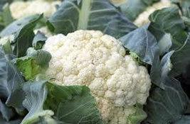 Cauliflower seeds for home garden from sri lanka ceylon products bonsai plants s - $3.99