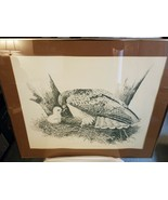Marsha Cooper Red-Tailed Hawk Feeding her baby Artist's proof - $26.23