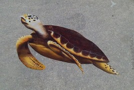 Sea Turtle hand Carved painted from large Palm Tree Frond, tortoise scul... - £60.96 GBP