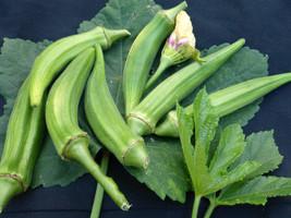 Okra Seeds - Clemson Spineless - Vegetable  Seeds - Outdoor Living - FREE SHIPP - $28.99+