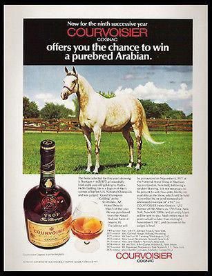 Primary image for Horse Arabian Horse Courvoisier Cognac Brandy Photo Shaitaan 1977 Contest Ad