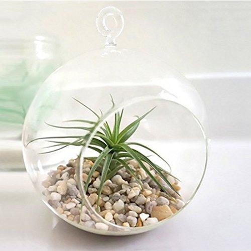 MyGift Charming Hanging Planter Terrarium
