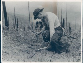 1938 Photo Boy Trees Planting Tools Field Northern Rocky Mountain Portra... - $23.23