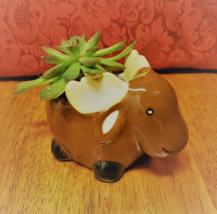 "Echeveria Succulent in Ceramic Animal Planter, 5"" Brown Moose Glazed Pot + Plant - $16.99"