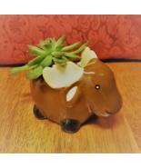 "Echeveria Succulent in Ceramic Animal Planter, 5"" Brown Moose Glazed Pot... - $16.99"